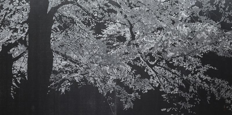 夜桜(曜)